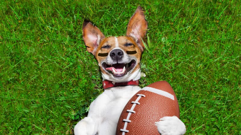 Are You Ready For Some Football Puns?
